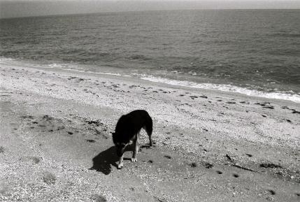 На берегу родного моря