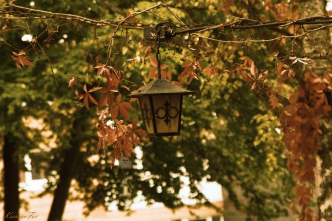 Autumn-light