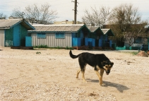 About the abandoned dog