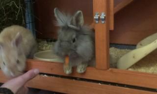 Первая морковка