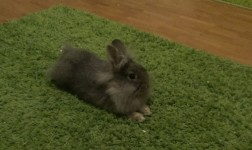 Сюзи обнаружила ковёр