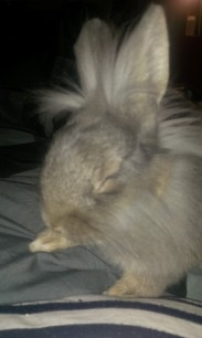 Спят усталые крольчата