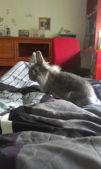 Доброе утро, хозяйка, Морковку Давай!