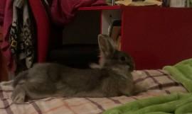 Сюзи считает, что кровать -это её собственность