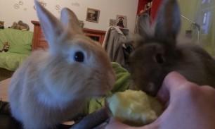 Я больше не могу съесть сама яблоко