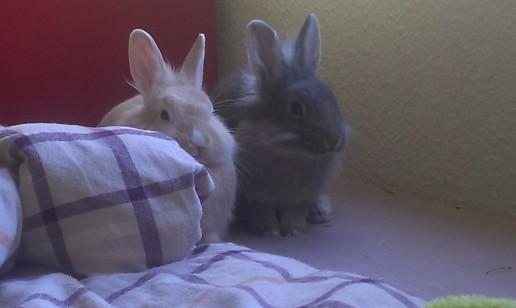 Мы не уйдём без Морковки!