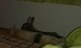 Так мы спим ночью